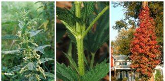 tüketilmemesi gereken zararlı bitkiler