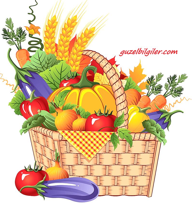 bitkisel tedavinin tarihçesi