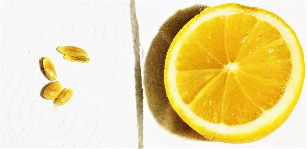 limon çekirdeği neye yarar