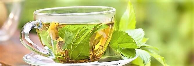 ceviz yaprağı çayı